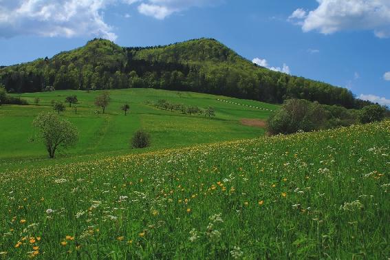 Albtrauf bei Talheim im Frühjahr