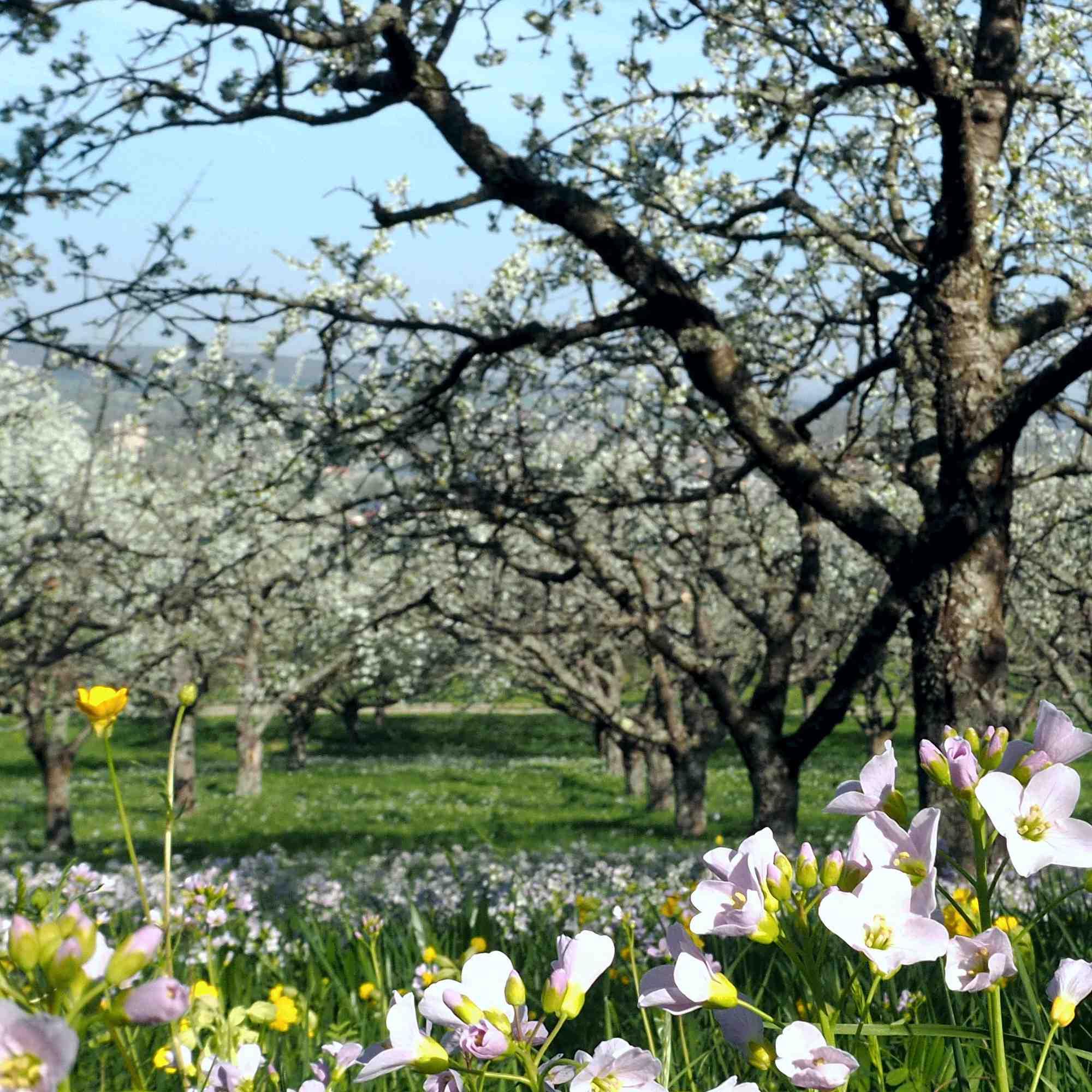 Frühling am Leisawegle