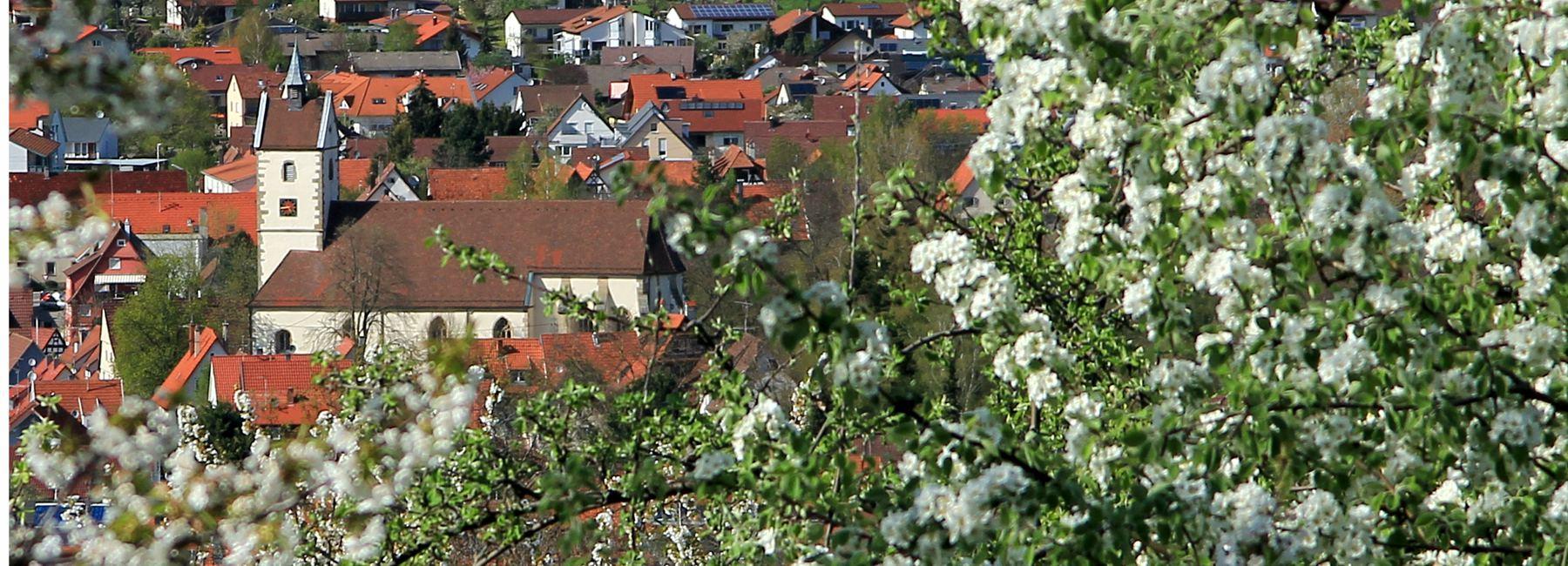 Blickauf Mössingen zur Streuobstblüte