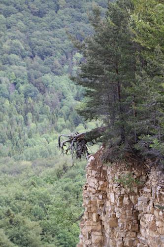 Bergrutsch am Hirschkopf (A Letsch)