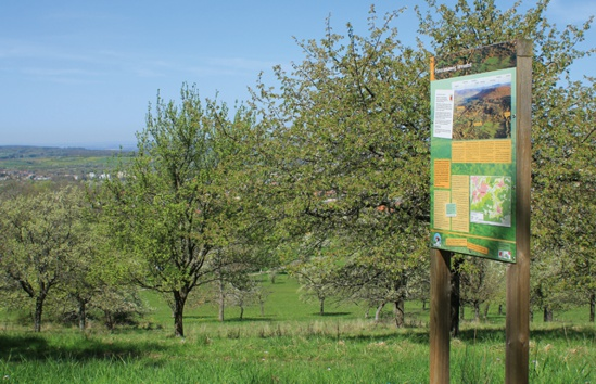 Panoramaweg Streuobst (Armin Dieter)