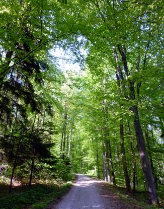 Waldweg unterhalb des Farrenbergs