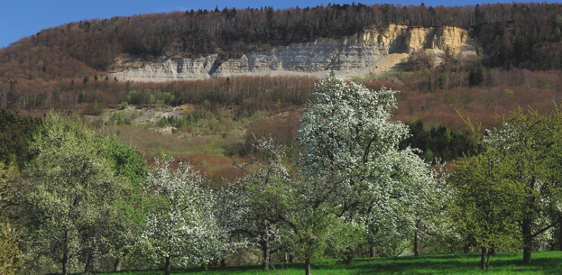 Bergrutsch zur Blütezeit
