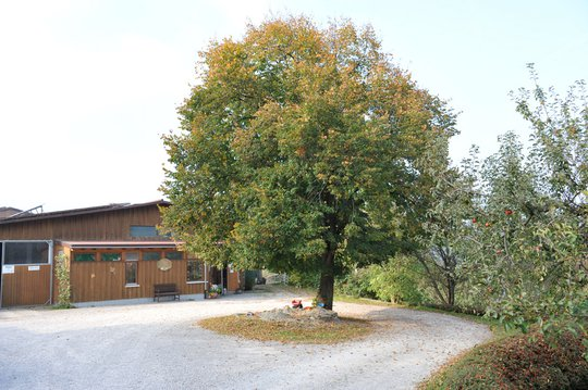 Lindenhof Talheim