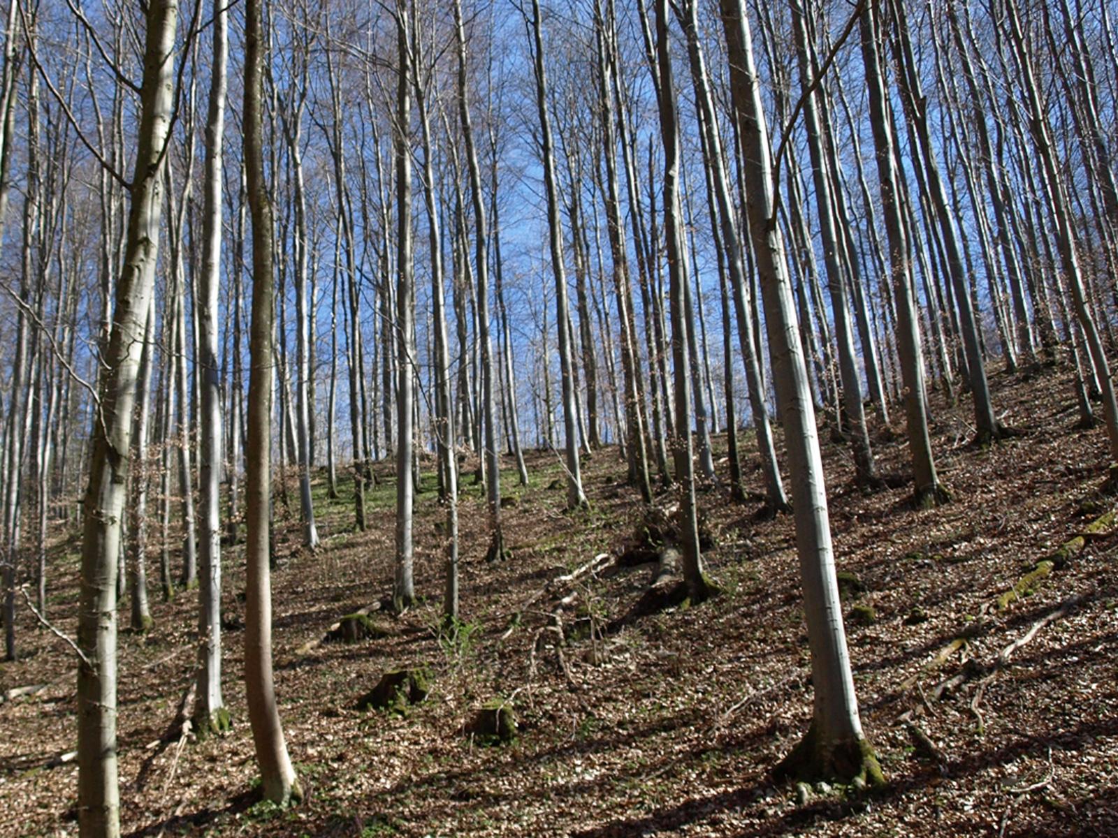 Ein Blick in den Wald