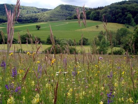 Blumenwiese am Wegesrand des Dreifürstensteigs