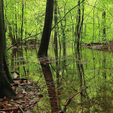 Grüner Wald und Gewässer