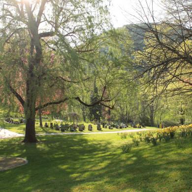 Baumgrabfeld Friedhof Talheim