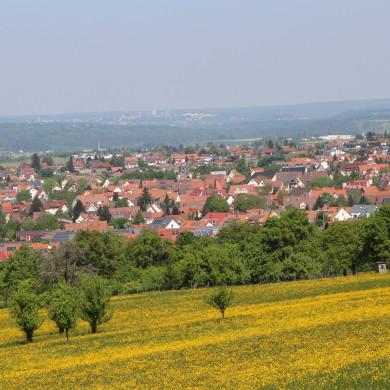 Blick auf die Stadt mit Streuobstbäume und Blumenwiese im Vordergrund