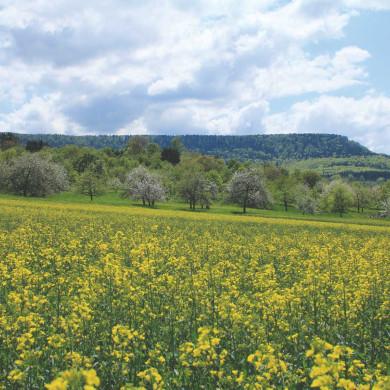 Frühjahrsblüte unterhalb des Dreifürstensteins