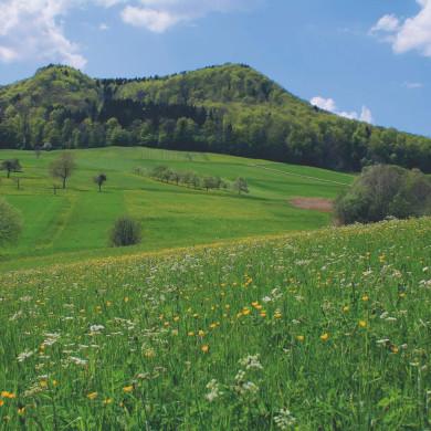 Alblandschaft im Tal