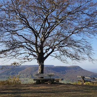 Baum mit Ruhebank auf dem Filsenberg - Teufelsloch