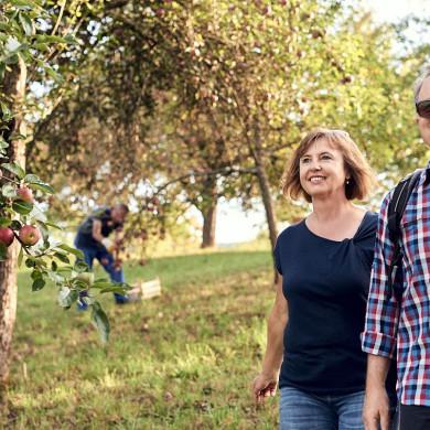 Herbstliches Wandern am Mössinger Früchtetrauf