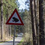 Achtung Vorsicht Verkehrszeichen mit einem Frosch an einer Straße im Waldgebiet