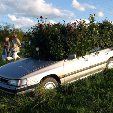 Rosenpark - Auto-Objekt