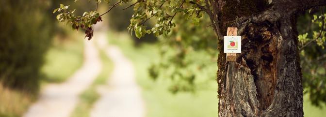 Beim Früchtetrauf, ein Apfelbaum mit dem Hinweisschild zur Firstwaldrunde