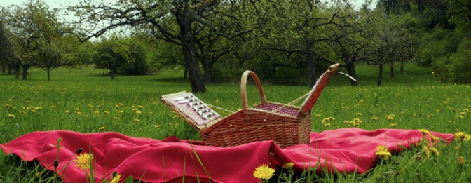 Picknick auf der Streuobstwiese am Mössinger Früchtetrauf