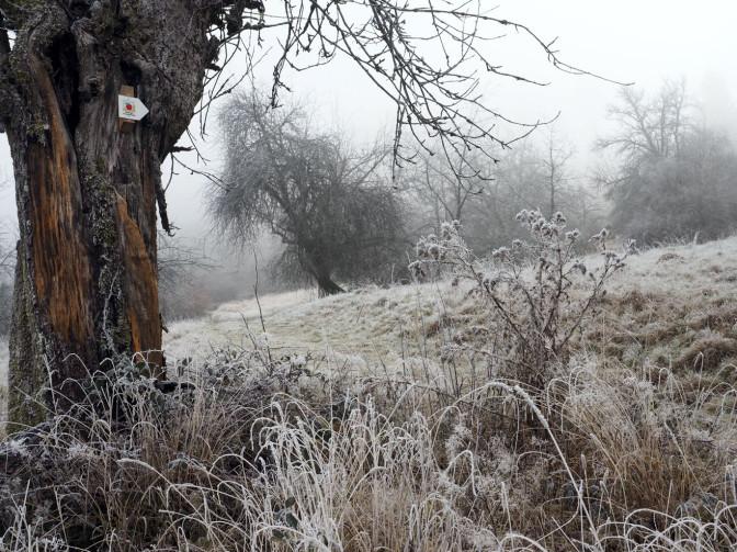 Das Mössinger Streuobstwegle im Winter